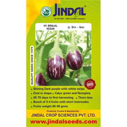 Jindal Brinjal Hybrid Seeds (baingan Seeds)-Kesar-10GM