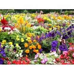 Nursery Flower Seeds (72)