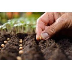 Nursery Seeds (207)