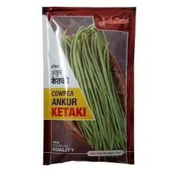 Ankur Cowpea Seed Ketki 500 gram