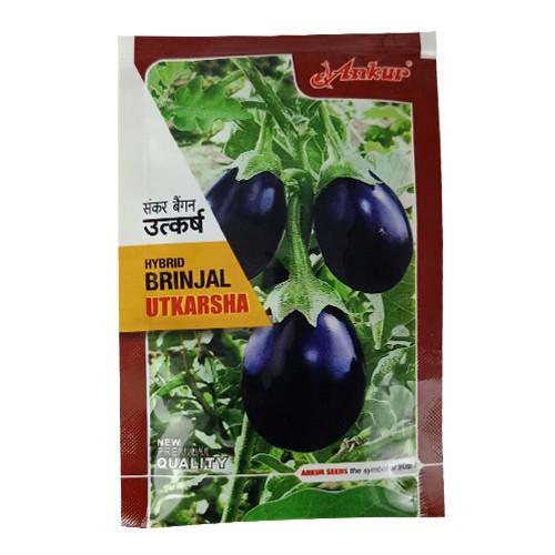 Ankur Hybrid brinjal-Utkarsha (10g) Vegetable Seeds