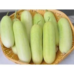 Cucumber Seeds (10)