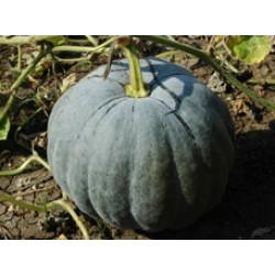 Pumpkin Seeds (2)