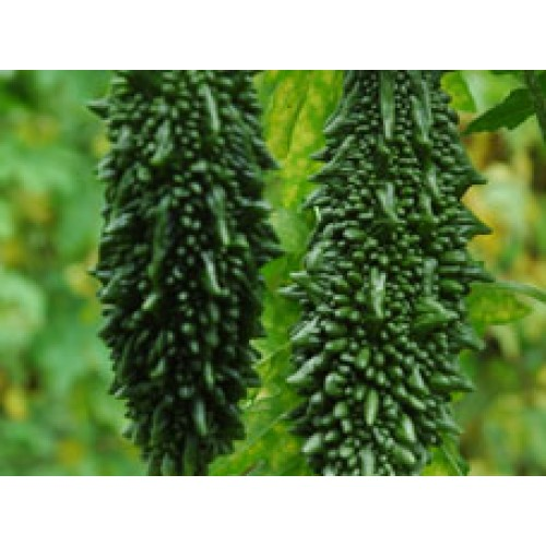 Ankur Hybrid  Bitter Gourd-Parag(146) (10g) Vegetable Seeds