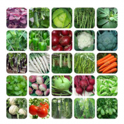 Buy Vegetable Seeds and get product worth 120 free