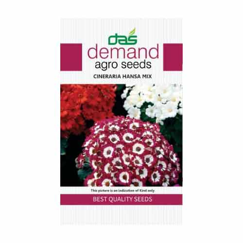 Demand agro seeds ( Cineraria hansa mix )