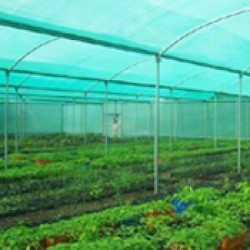 Agro Shed Nets | Green Nets (5)