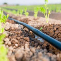 Drip Irrigation (39)