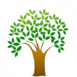 Organic Stimulant (3)