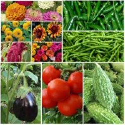 Vegetable Seeds (287)
