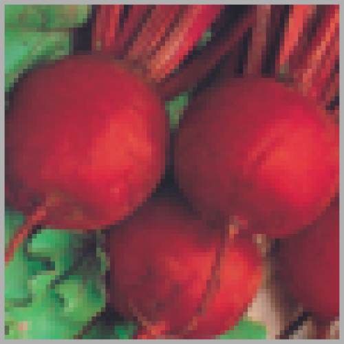 Sungro Castelo (50g) Beet Root Vegetable Seeds