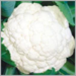 Cauliflower Seeds (3)