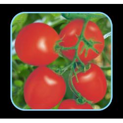 Tomato Seeds (18)