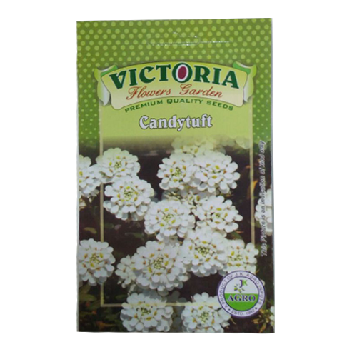 Victoria Candytuft  Flower Seed