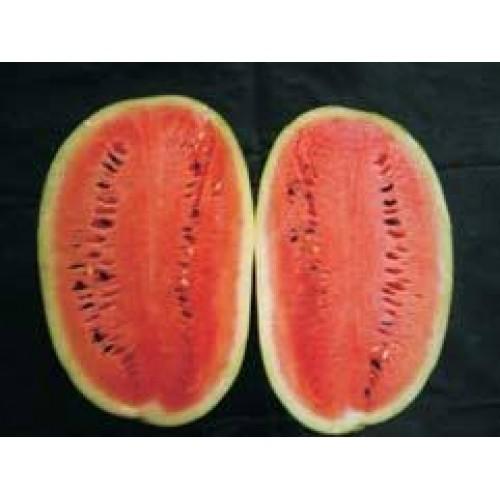 Ankur sugar cube watermelon-50gm
