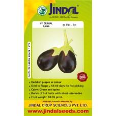 Jindal Brinjal Hybrid (baingan Seeds)-Raina-10GM