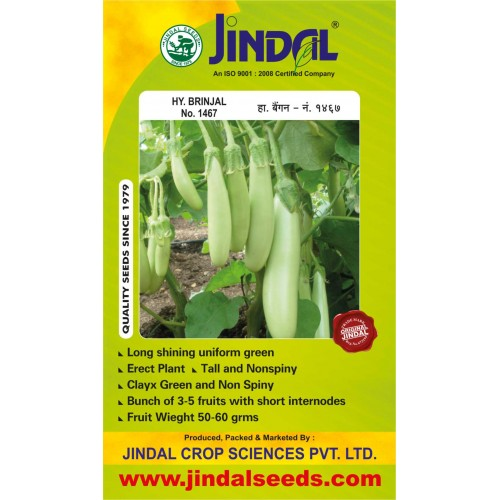 Jindal Brinjal Hybrid Seeds(baingan Seeds)-No.1467 -10GM