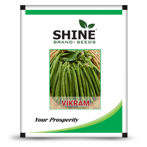 Bush bean - Vikram -500gm
