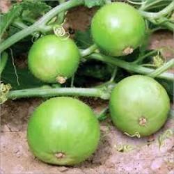 Tinda Seeds (4)